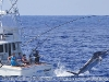 Early 2010 Marlin Season