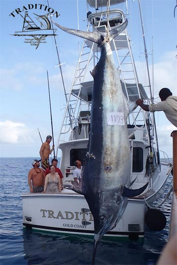 1103 pound black marlin on Tradition
