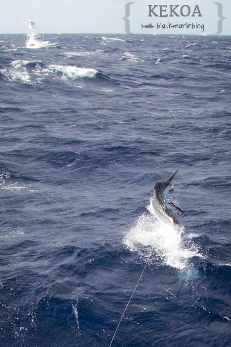 kekoa-black-marlin